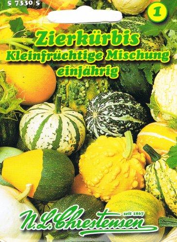 Zierkürbis Kleinfrüchtige Mischung rankend Kürbis Cucurbita pepo var. ovifera