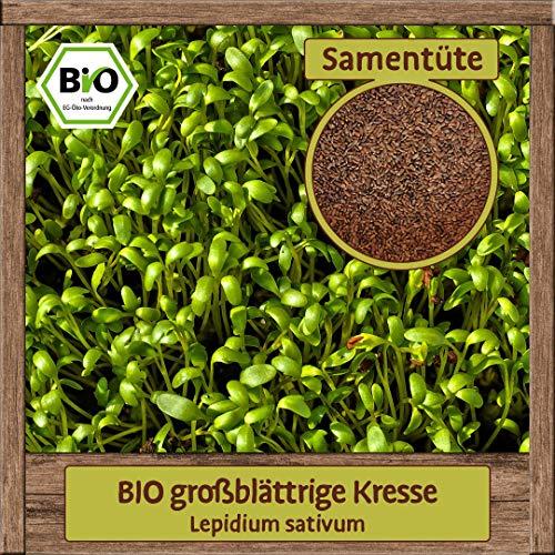 BIO Kresse Samen großblättrige Gartenkresse Kräutersamen Anzucht Fensterbank oder Garten