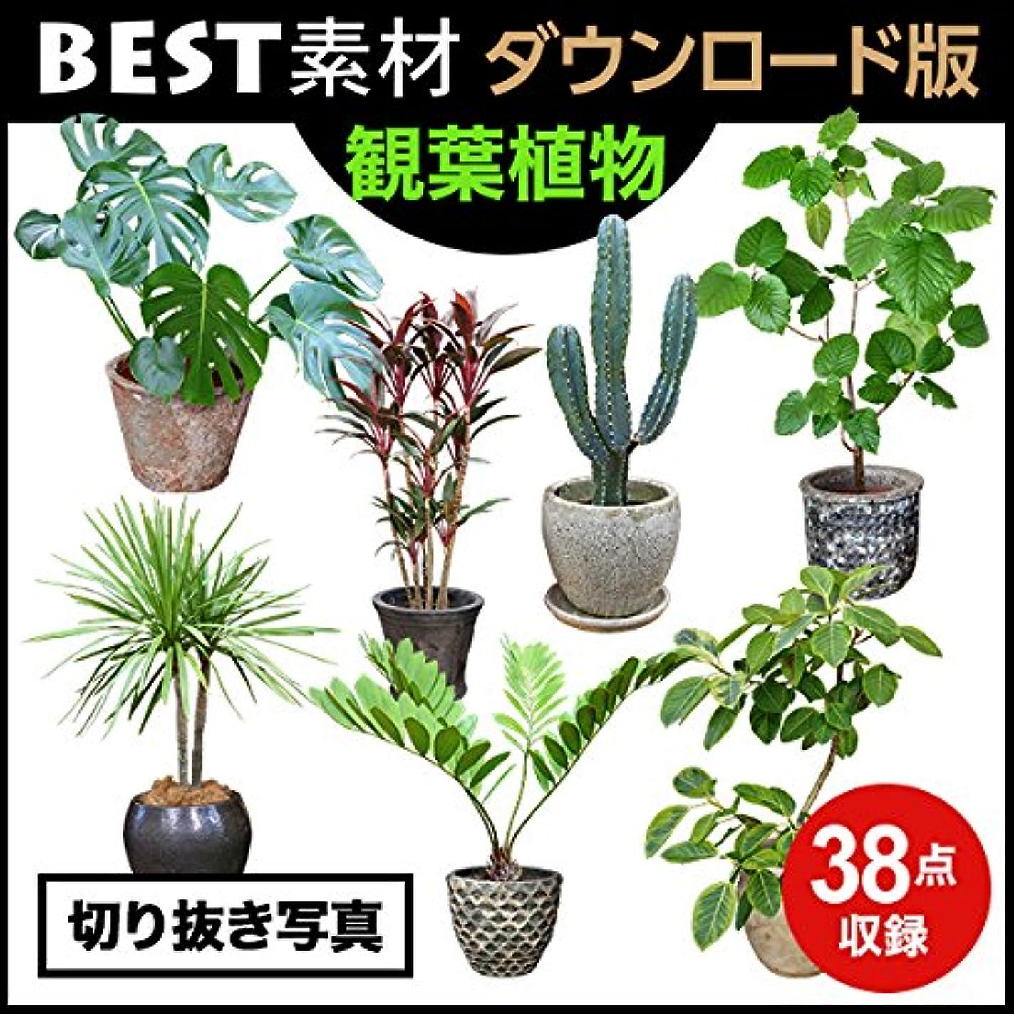 アブストラクト獲物科学者【BEST素材】切り抜き写真_観葉植物|ダウンロード版