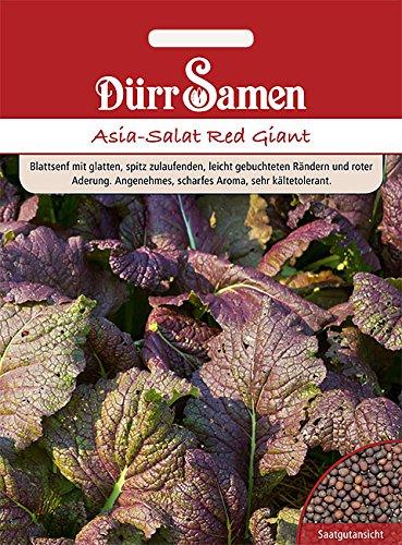 Dürr-Samen - Asia-Salat Red Giant