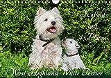 Kobold auf 4 Pfoten - West Highland White Terrier (Wandkalender 2020 DIN A4 quer): West Highland White Terrier begleiten auf bezaubernden Fotos durch ... (Monatskalender, 14 Seiten ) (CALVENDO Tiere) - Sigrid Starick