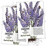 Seed Needs, Spike Lavender (Lavandula latifolia) Twin Pack of 500...
