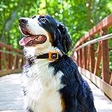 Motorola Scout Traks – GPS Tracker und Aktivitätstracker für Hunde und Katzen – Inkl. 1 Jahr Abo, schwarz - 12