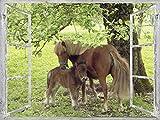 Artland Qualitätsbilder I Wandtattoo Wandsticker Wandaufkleber 80 x 60 cm Tiere Haustiere Pferd Collage Grün C0AJ Fensterblick Pony mit Kind