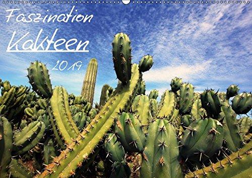 Faszination Kakteen (Wandkalender 2019 DIN A2 quer): Kalender mit 13 wunderbaren Kakteen Fotografien (Monatskalender, 14 Seiten ) (CALVENDO Natur)