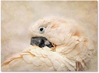 Preening Umbrella Cockatoo by Jai Johnson, 14x19-Inch Canvas Wall Art