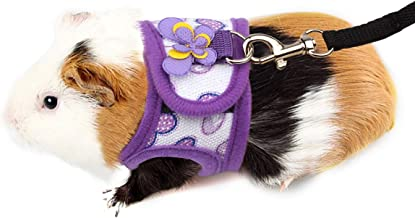 Amazon Com Guinea Pig Harness And Leash