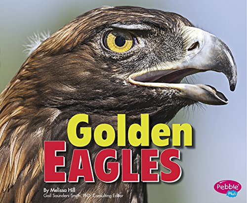 Golden Eagles (Birds of Prey)