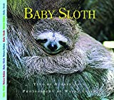 Baby Sloth (Nature Babies)