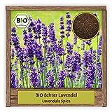 BIO Echter Lavendel Samen (Lavendula spica) Blumensamen mehrjährige & winterharte Pflanze Kräutersame für Garten, Balkon oder als Bienenweide