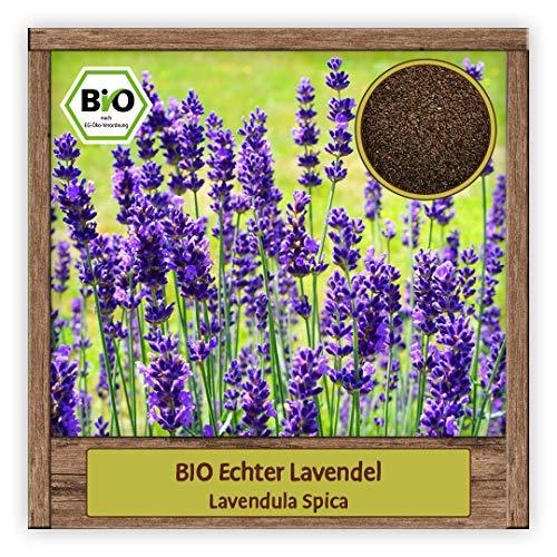 BIO Echter Lavendel Samen (Lavendula...