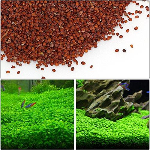 Decdeal Aquarium Pflanzen Samen 10g Fischbehälter Wasserpflanzen Samen für Aquarium-Dekoration