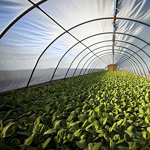 Mississ Garden Poly Tunnel Gewächshaus, Pflanzen Metallrahmenschutz Dachplatten Foliengewächshaus, faltbares Gewächshaus, wasserdicht UV-beständig und Kälteschutz