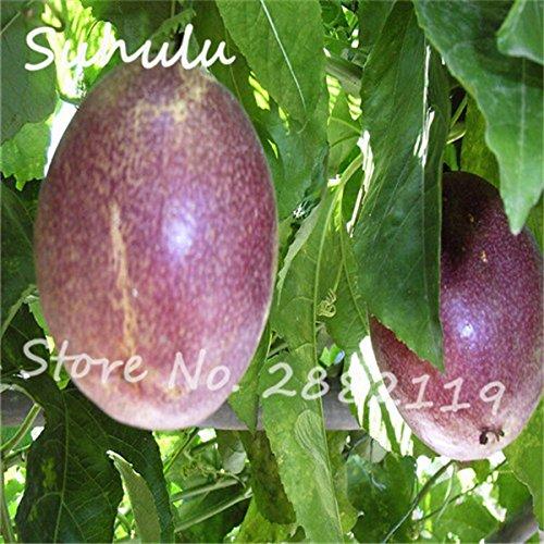 Graines de fruits exotiques Passion 60 particules Violet Passiflora edulis Passion Graines de fleurs Diy jardin Plantation d'extérieur Plante