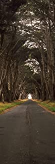 Posterazzi PPI152724L Monterey Cypress Tree Tunnel Station Point Reyes National Seashore Marin County California USA Poster Print, 36 x 12 Varies