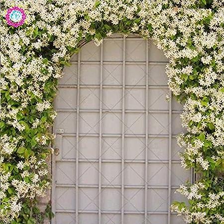 Planta al aire libre 20pcs Escalada Raras Semillas Las semillas de flor del jazmín jazmín fragante jazmín de Arabia Planta de semillas para jardín