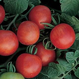 gardeners delight tomato