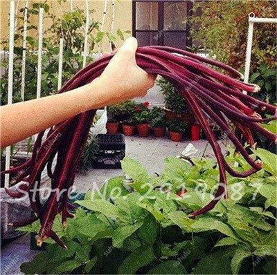 Vente Promotion! 5 Pcs mixte Graines long haricot Très facile d'intérêt Mini Garden Crochet d'or légumes biologiques en santé Graden Plantes 18