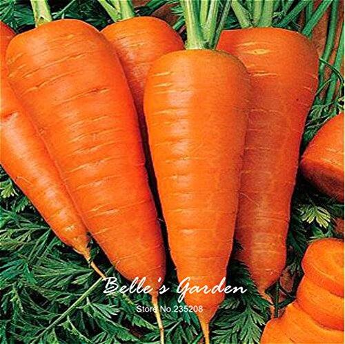 100pcs carotte Semences Rouge Bleu Jaune arc-en-Graines Légumes Jardin des Plantes Heriloom bio Daucus Carota Graines de Jardin potager 07