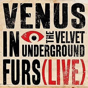 Venus In Furs (Live)