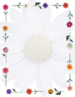 "Great Papers! Daisies Letterhead, 80 Count, 8.5""x11"" (2013178)"