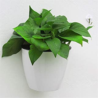 Suchergebnis auf Amazon.de für: Blumentopf für die Wand Hänge-Blumentopf