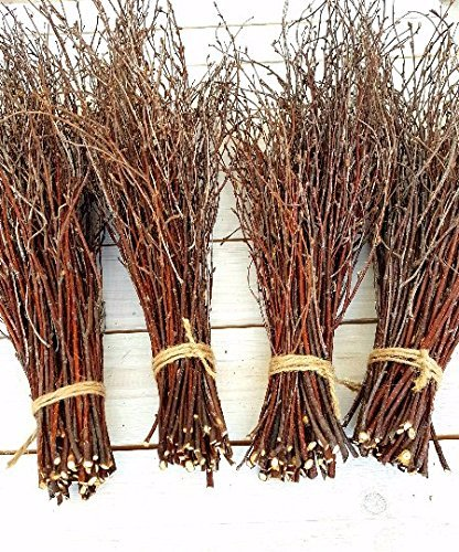 100 pcs Birch Twigs for vase Decoration. Set of 2 Bundles of Branches. ECOWOODDECOR 100% Natural Sticks 17 inches