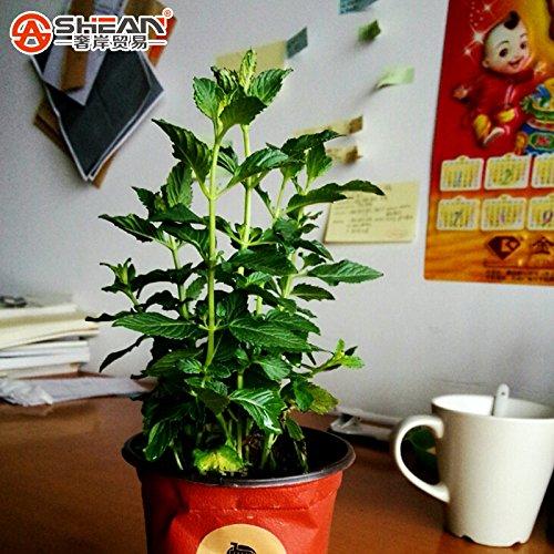 L'Emballage d'origine végétale Graines Vert Ail Graines de poireau support Ressort à lame d'oignon 10 g/sac