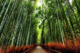 Bamboo Forest Trees with Path in Kyoto Japan Photo Art Print Laminated Dry Erase Sign Poster 36x24