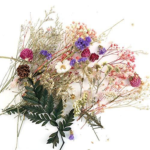 Material natural de flores secas, no tóxico, sin olor. Seguro, respetuoso con el medio ambiente y fácil de usar. Tamaños bonitos, hermosos colores. Materiales para hacer tarjetas de felicitación y manualidades. Puedes hacer velas aromáticas según tu ...