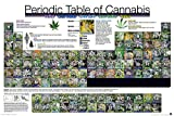 Close Up Periodic Table of Cannabis Periodensystem der