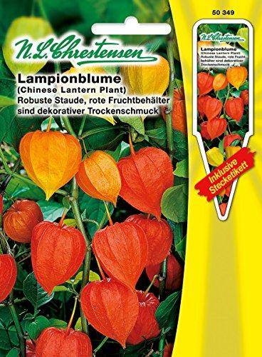 N.L.Chrestensen 50349, Physalis alkekengi, Lampionblume, Orange
