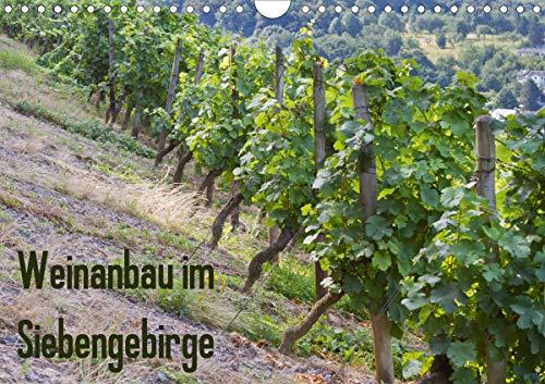 Weinanbau im Siebengebirge (Wandkalender 2021 DIN A4 quer)