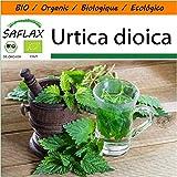 SAFLAX - Jardin dans le sac - BIO - Grande ortie - 2000 graines - Avec substrat de culture dans un sac de levage facile à manipuler. - Urtica dioica