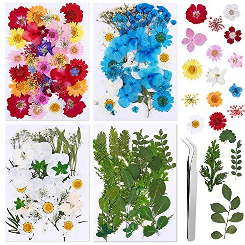 Flores Prensadas Secas 134 Pcs Naturales Flor Prensada Mezclada Juego Flores Seca...