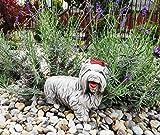 "Green Lane Garden Figura de Perro de Adorno de jardín de Cemento - Alegre York The Corkie"" (Blanco)"