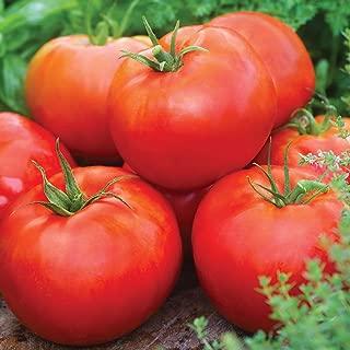 big daddy tomato