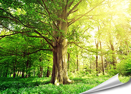 PMP-4life Baum-Poster   140x100cm   hochauflösendes XXL Wand-Bild Baum, Natur Poster extra groß, XL Fotoposter   Wand-deko Bild Landschaft Bäume Blumen Wald