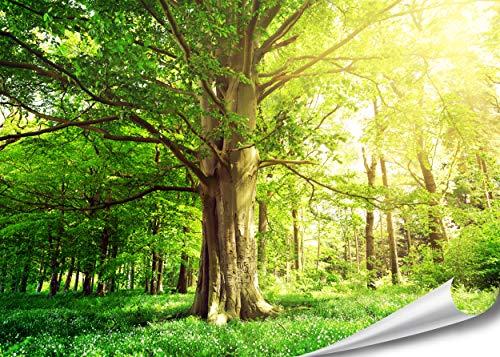 PMP-4life Baum-Poster | 140x100cm | hochauflösendes XXL Wand-Bild Baum, Natur Poster extra groß, XL Fotoposter | Wand-deko Bild Landschaft Bäume Blumen Wald