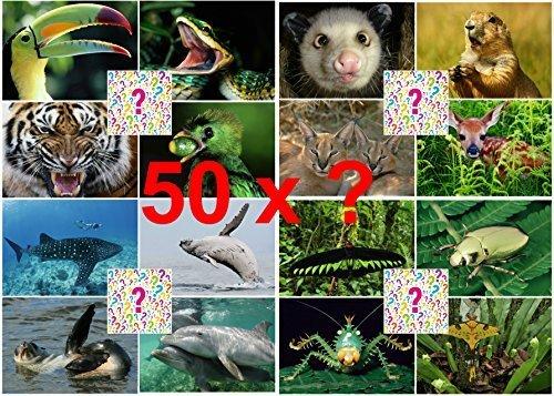 SURPRISE-PAKET 3-D-Postkarten: 30 St. hochwertige Lentikular-Postkarten mit Tier- und Naturmotiven - ideal für Sammler, Schule oder Postcrossing