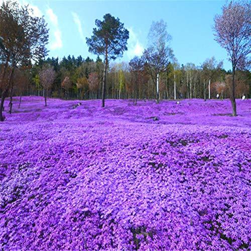 HTHJA Frühling Blumen mehrjährig...