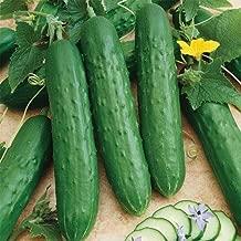 David's Garden Seeds Cucumber Slicing Saladmore Bush SL1123 (Green) 50 Non-GMO, Hybrid Seeds