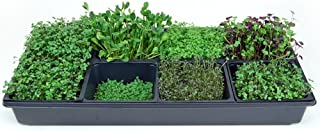 Hydroponic Sectional Microgreens Growing Kit - Grow Micro Greens & Herbs Indoor Gardening: All Supplies - Seeds, Trays, Instructions, Etc.