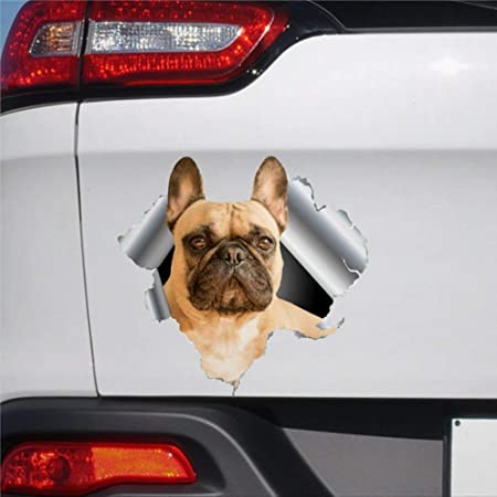Französische Bulldogge Hunde Aufkleber French Bulldog Sticker Decal Murphy Dub Auto