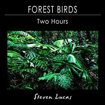 Forest Birds - Two Hours