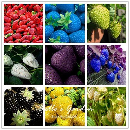 100pcs 9 variétés Choix Strawberry Graines Fraise Fruit Graines pot Bonsai Balcon Patio Jardin usine de bricolage Mix