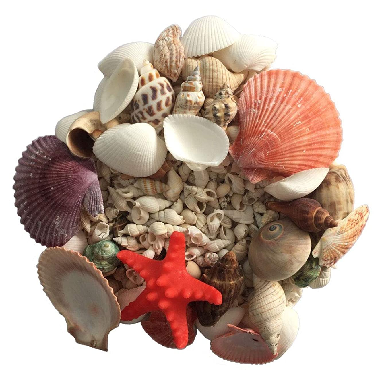 PIVBY Sea Shells Mixed Tiny Miniature Beach Seashells Candle Making,Home Decorations, Beach Theme Party Wedding Decor, DIY Crafts, Fish Tank and Vase Fillers (14oz)