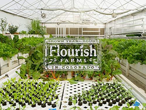 Colorado Aquaponics System Takes Farming To a New Level