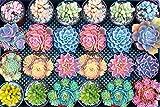 Puzzle de 1000 Piezas de Flores Mundo,Rompecabezas de Paisaje idílico(Rompecabezas para Niños y Adultos, 12-50 año(s))