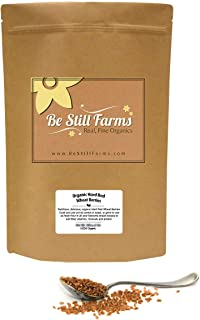 Be Still Farms Organic Hard Red Wheat Berries (5lb) Organic Red Wheat Berries aka Trigo en Grano - Wheat Bellies - Prepare as Cooked Wheat Grain or Grind into Hard Red Wheat Flour, Bulk Wheat Berries